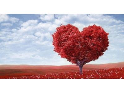 Авторы журнала «Колесо жизни» о любви