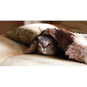 Фелинотерапия: лечение кошками