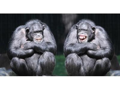 Тайна улыбки: почему мы улыбаемся, когда нам плохо и неловко?