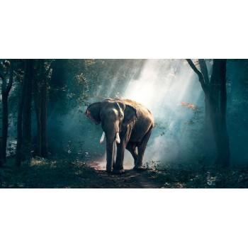 Человек и дикая природа: чудеса света, которые мы не замечаем