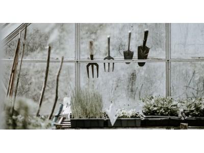 Огород на подоконнике – рай своими руками