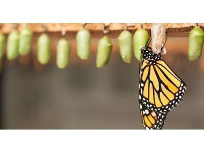 Расправленные крылья: страхи и сила внутренней трансформации
