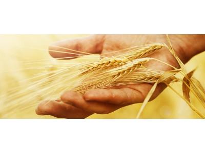 Как добиться цели? Метафора «урожай» в самопознании